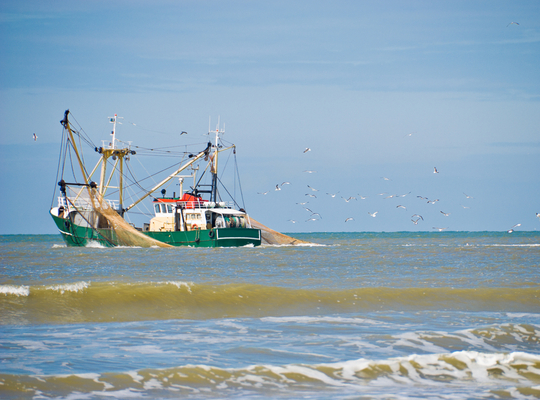 Protecting the Flemish fishing industry against Brexit